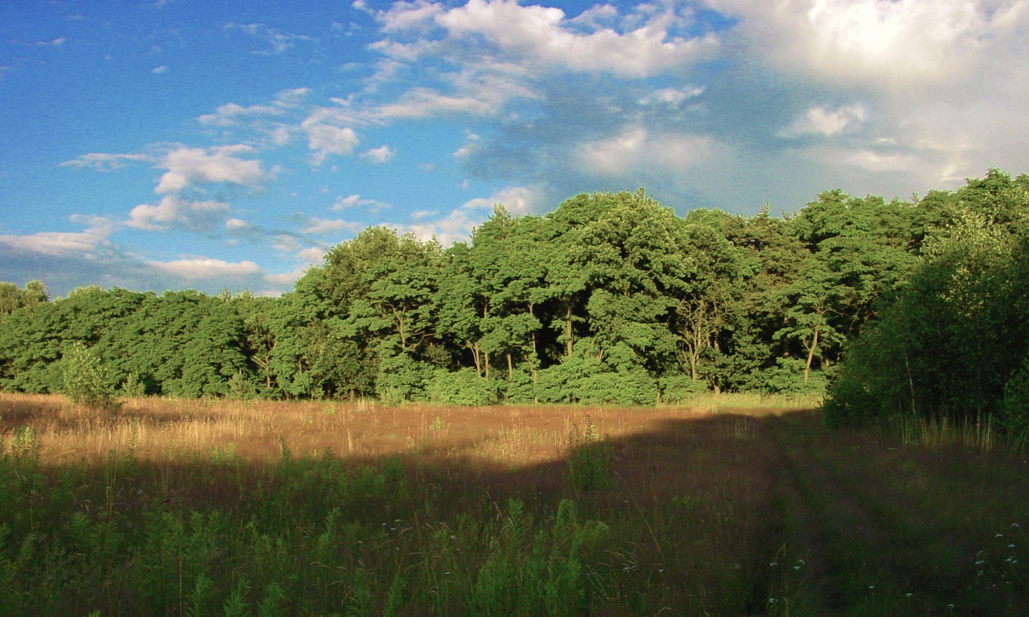 Bürgerinitiative Wald bleibt Wald
